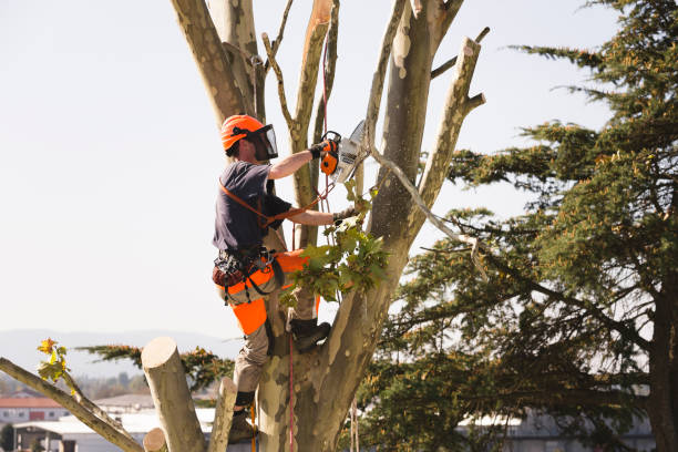 Tree Pruning: To Prune or Not to Prune is a Very Good Question