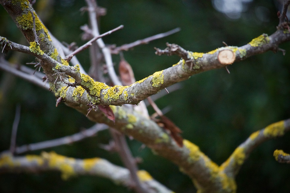 Tips on How to Tree Prune Backyard Oasis