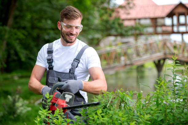 The Importance of Professional Tree Care Services