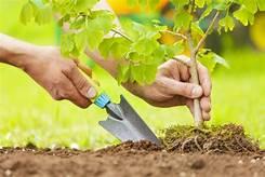 Tree Planting 101: Make It Right