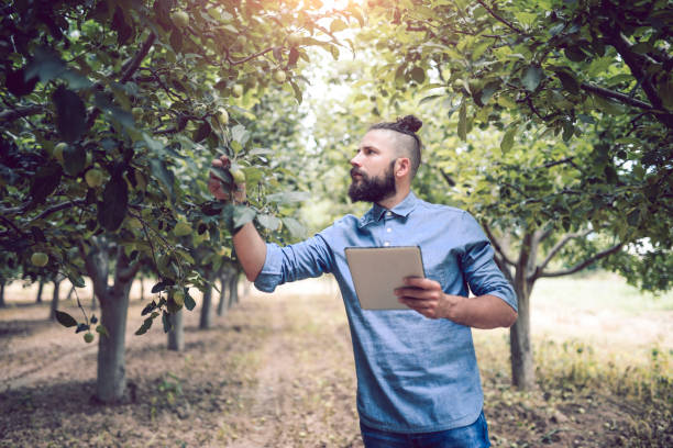 HOW TO SELECT THE RIGHT TREE FOR YOUR YARD