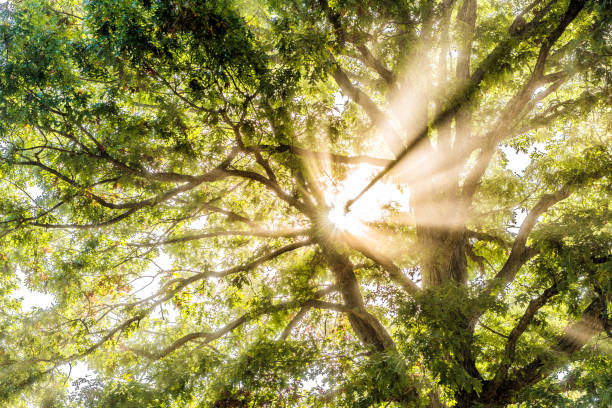 Why It's Important to Give Your Trees a Healthcare Checkup