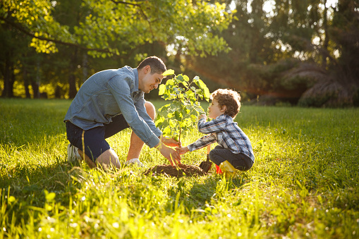 Taking Care of Trees: The Basics Of Young Tree Care