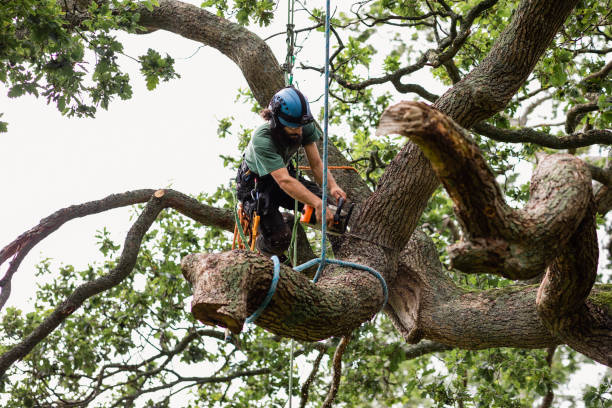 Tree Care: Why Tree Work Is Expensive?