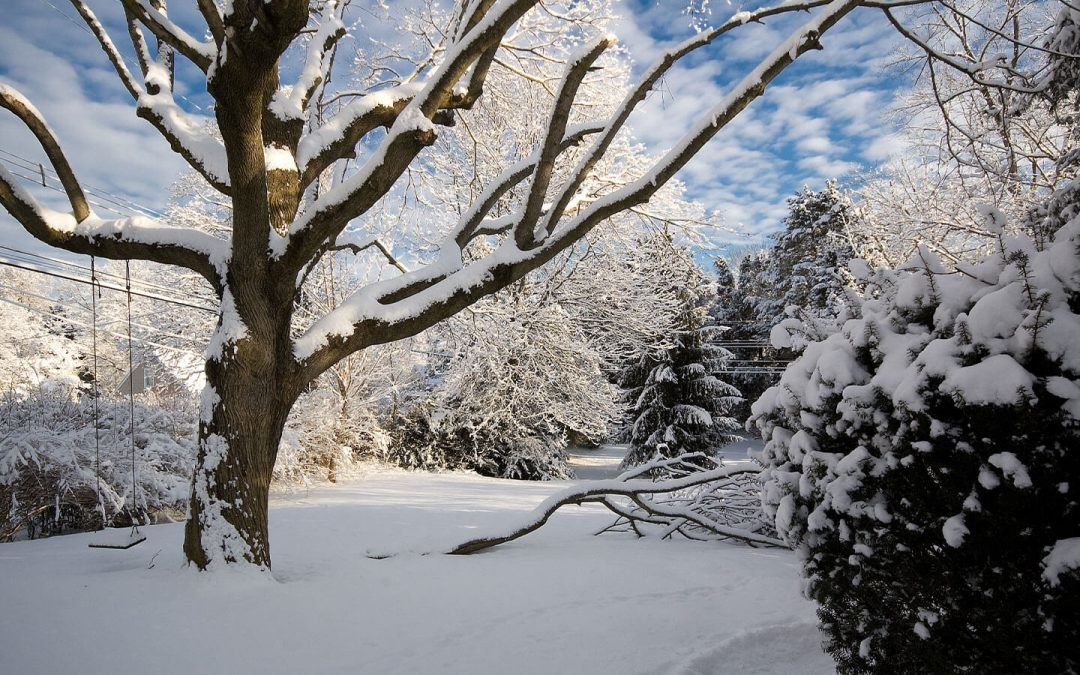 Caring Your Backyard Tree On Autumn Or Early Winter
