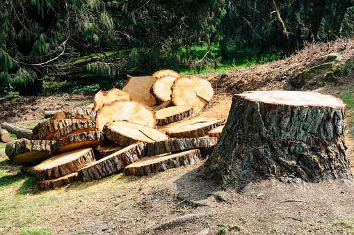 Signs You Need to Have a Tree Removed Right Away