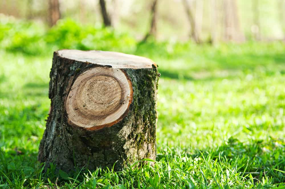 Learn About The Pros And Cons Of Tree Removal