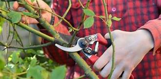Guide For Becoming A Pro For Pruning Trees