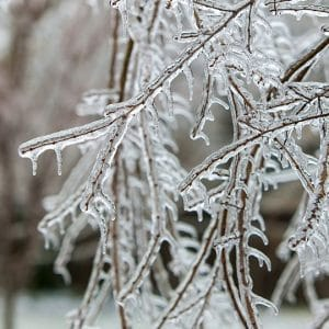 Tips For Repairing Winter Damage On Your Backyard Trees