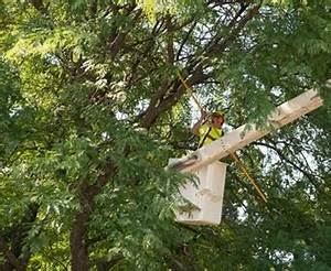 How To Determine The Cost Of Tree Removal, Trimming, Or Pruning