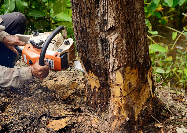 Safety Guide On How To Cut Down A Tree Safely