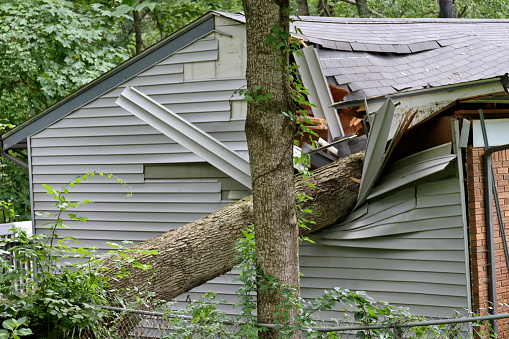 Signs Your Backyard Tree May Be Dangerous