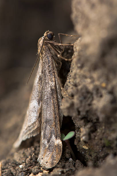 How To Protect Your Fruit Trees From Winter Moths