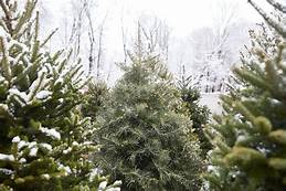 Tips for Choosing the Perfect Christmas Tree