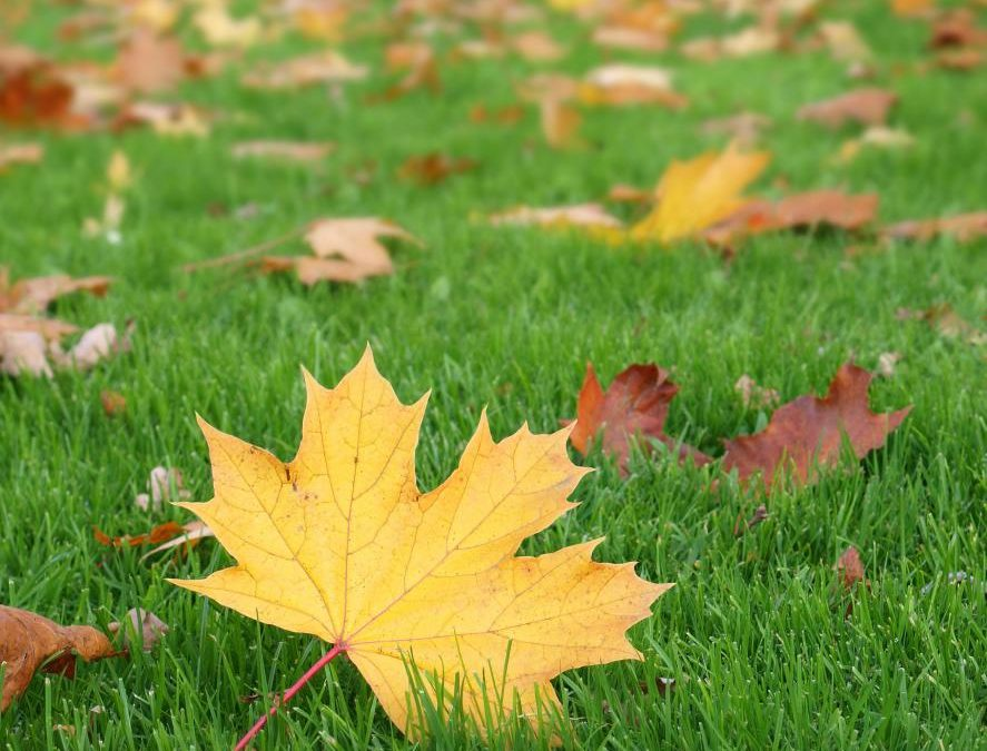 Causes Of Why Your Tree Leaves Are Losing
