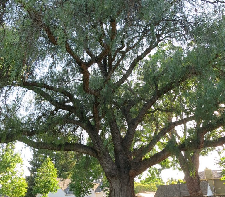 All You Need To Know About Training Your Tree Branches