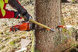 Step By Step: Felling A Tree Using A Chainsaw