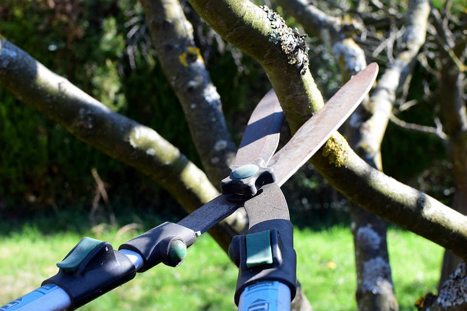 Great Reasons to Hire a Professional to Conduct Tree Pruning