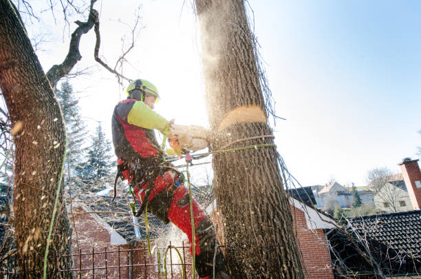 WHEN TO KEEP A DYING TREE AND WHEN TO CUT IT DOWN