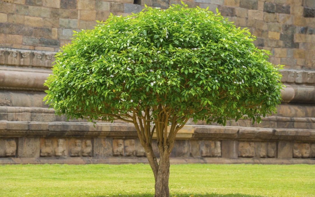 Guide On How To Prune Your Ornamental Trees And Shrubs