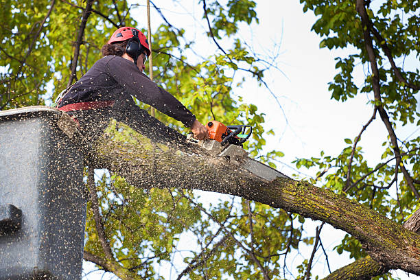 Comprehensive Tree Services to Keep Your Tree Happy