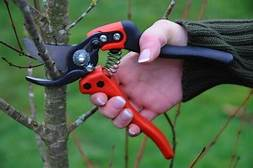 Pruning Introduction: Proper Way Of Pruning Trees