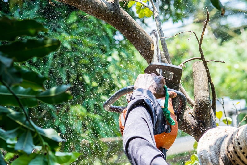REASONS WHY YOU NEED TO HIRE A TREE REMOVAL SERVICE
