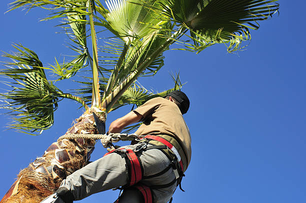 How Much Does Palm Tree Trimming Cost?