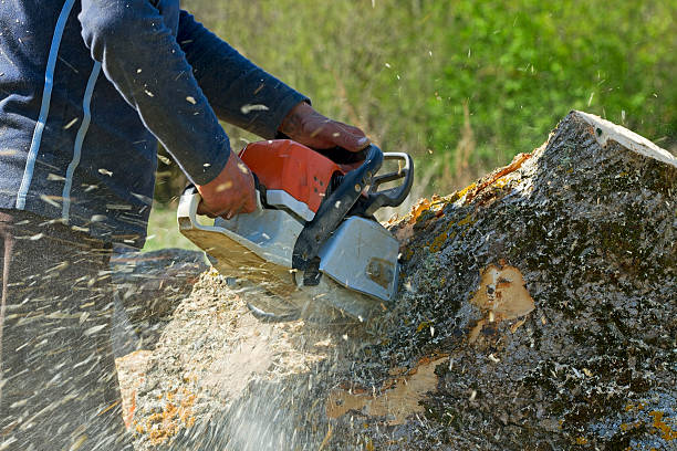 Tree Services: Most Common Reasons For Tree removal